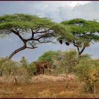 Субъективно о Кении, Амбосели и развод по-масайски