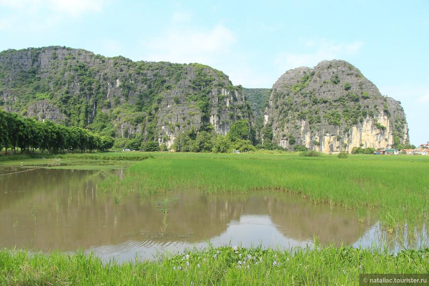 Ярко зеленые рисовые поля-деревенская пастораль.