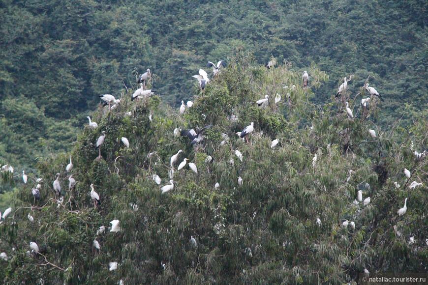Птицы летели и летели, а мы просто стояли и любовались за их  гнездованием на ночь. Очень быстро темнело, а ведь предстоял обратный путь.