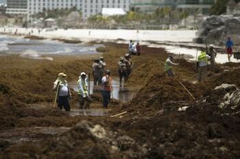 В этом году на пляжах мексиканского Канкуна будет в три раза больше водорослей