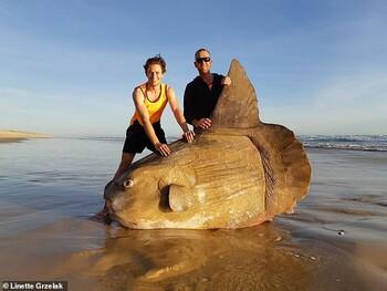 В Австралии нашли гигантскую рыбу-луну