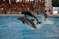 Аквапарк «Аквалэнд» (Aqualand)