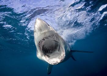 Акула напала на дайвера на северо-востоке Австралии
