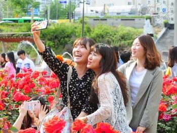 В Сеуле проведут масштабный Фестиваль роз