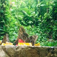 Сад бабочек в парке Шкарет