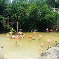 Фламинго в парке Шкарет