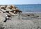 Пляж Онисилос в Лимассоле, Кипр