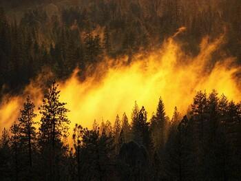 В Китае из-за лесных пожаров погибли почти 30 человек