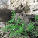 Пещера-святилище Кырк-Азиз