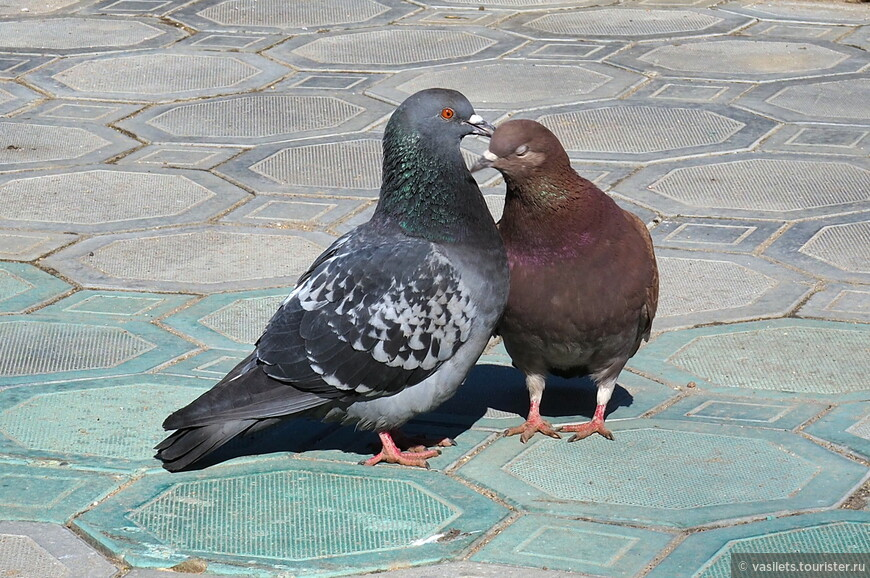 """А эта голубка уже нашла своего """"принца"""", ей ждать больше незачем"""