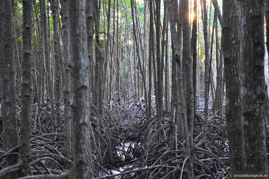 Прибрежный мангровый лес в Районге
