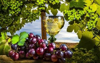 В Москве пройдёт первый Фестиваль балканских вин