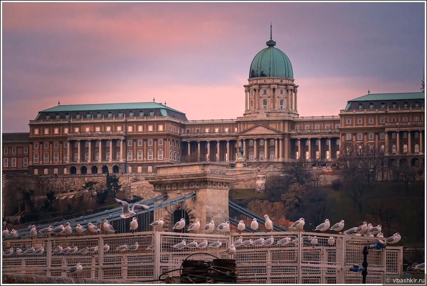 Чайки и Королевский дворец.
