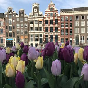 Цветущая Голландия