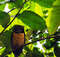 Через призму фауны Коста-Рики или чем заняться в Аренале