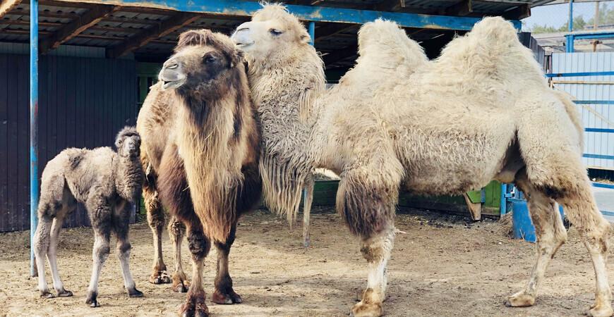 Тюменский зоопарк (Винзили)