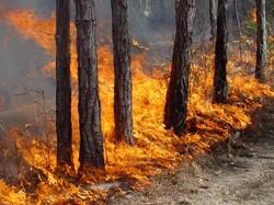 В заповедниках России от пожаров пострадало около 30 000 га