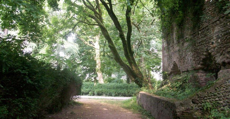 Зугдидский ботанический сад