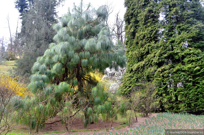 Ботанический сад виллы Таранто (Giardini Botanici di Villa Taranto)