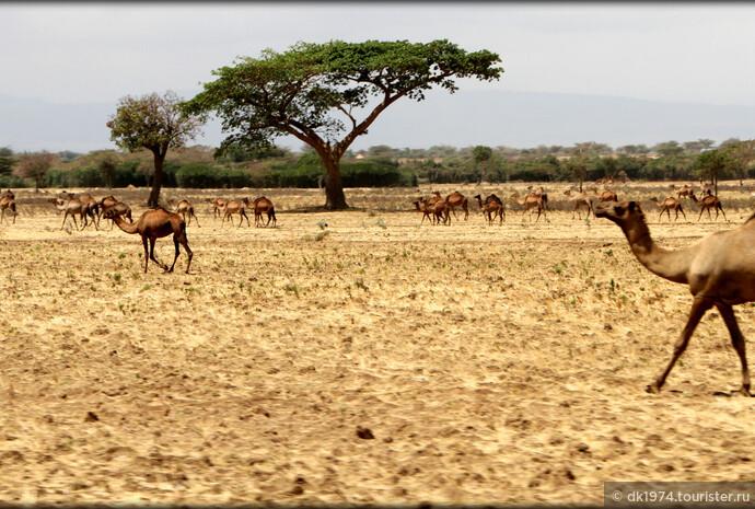 Дорожные зарисовки — Эфиопия. День 1 — озеро Звай