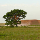 Наурзумский государственный природный заповедник