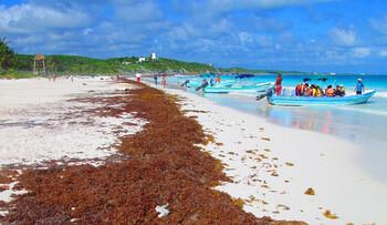 Пляжи Мексики вновь страдают от водорослей