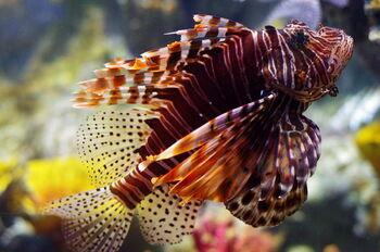Рыбы в океанариуме Пхукета