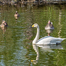 Парк флоры и фауны «Роев ручей»