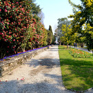 Ботанический сад острова Мадре