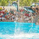 Дельфинарий «Немо» на Пхукете
