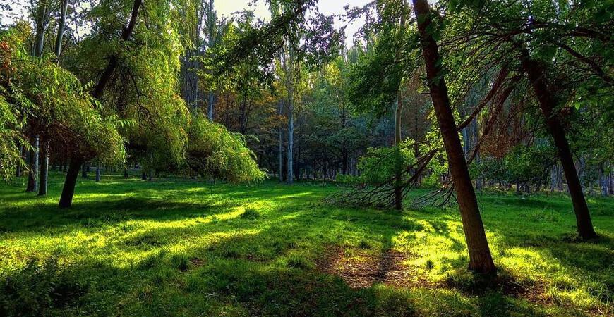 Парк «Карагачевая роща»