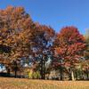 Осенью Бостон особо красив. Экскурсия по Бостону с Ярославом Бондаренко.