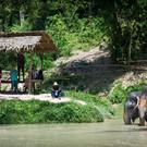Заповедник слонов на Пхукете