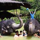 Ферма слонов на Пхукете