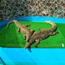 Крокодиловая ферма «Крокодиловый каньон»