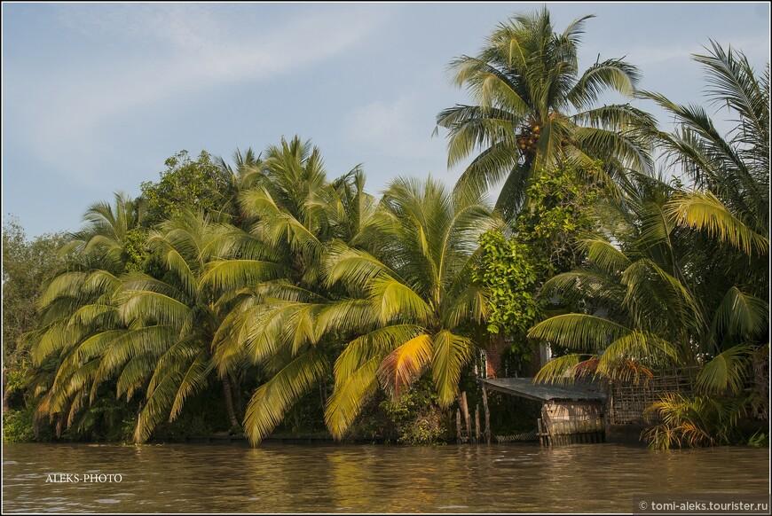 Живописные джунгли - типичный местный ландшафт... Это, как декорации в театре... Дельта Меконга занимает большу́ю часть юго-западного Вьетнама, площадь которого — 39 тыс квадратных километров. Больше пяти тысяч притоков - это серьезно - целая водная империя...