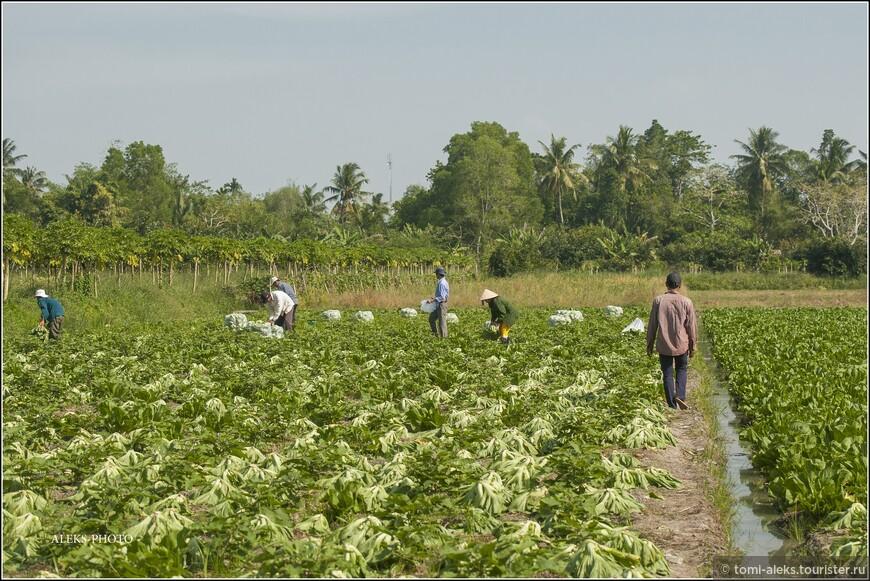 Проплывали мимо сельхоз угодий - захотелось выйти и чуть-чуть поснимать аграриев и их овощи...