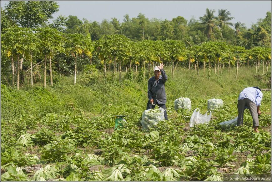 Аграрий машет нам рукой... На заднем плане банановые плантации...