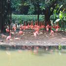 Сафари-парк Чимелонг (Chimelong Safari Park)