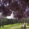 Тоскана, САн Джиминьяно, цветущие глицинии в старинной крепости, экскурсии по Флоренции и Тоскане с частным индивидуальным гидом на русском языке