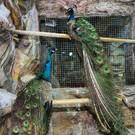 Зоопарк «Zoo Парк» в Алуште