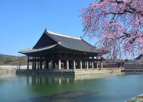 Хроники сеульского гастрономического порока