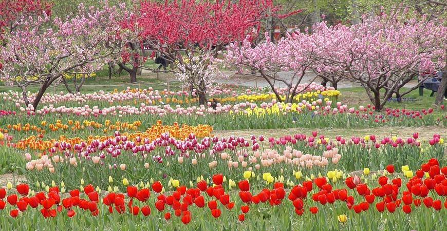 Пекинский ботанический сад (Beijing Botanical Garden)