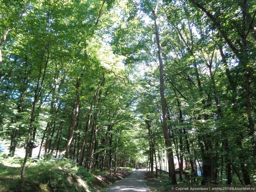 Музей Астра находится в огромном лесу