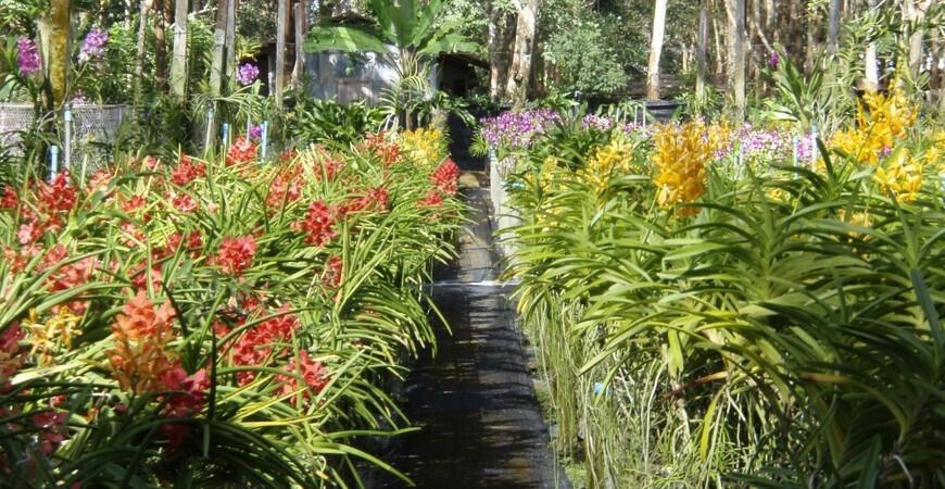 Сад орхидей на Пхукете (Phuket Orchid Farm)