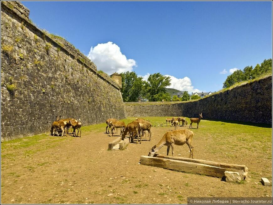 Главная фишка в том, что ров, окружающий цитадель, является домом для редких иберийских оленей!