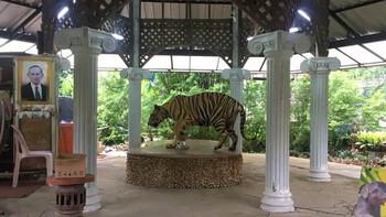 Очередной случай жестокого обращения с животными произошел в зоопарке Пхукета