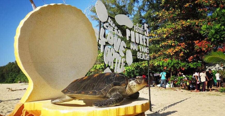 Фестиваль выпуска на волю черепах