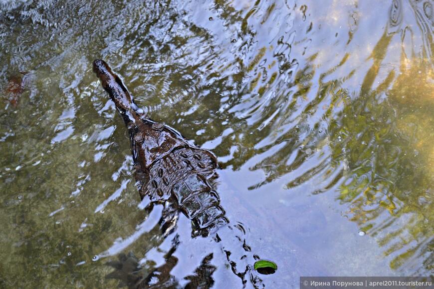 Крокодилы в парке рептилий представлены несколькими видами.