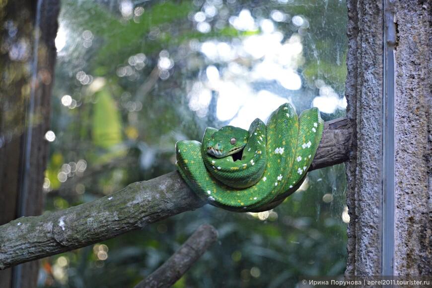 Кто-то зеленый свернулся калачиком